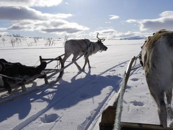 Bijzondere vakantie Lapland