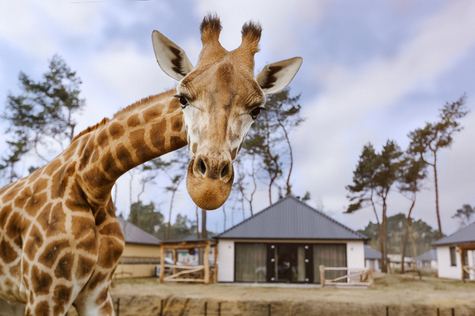 Supertrips - Safari Resort – Beekse Bergen