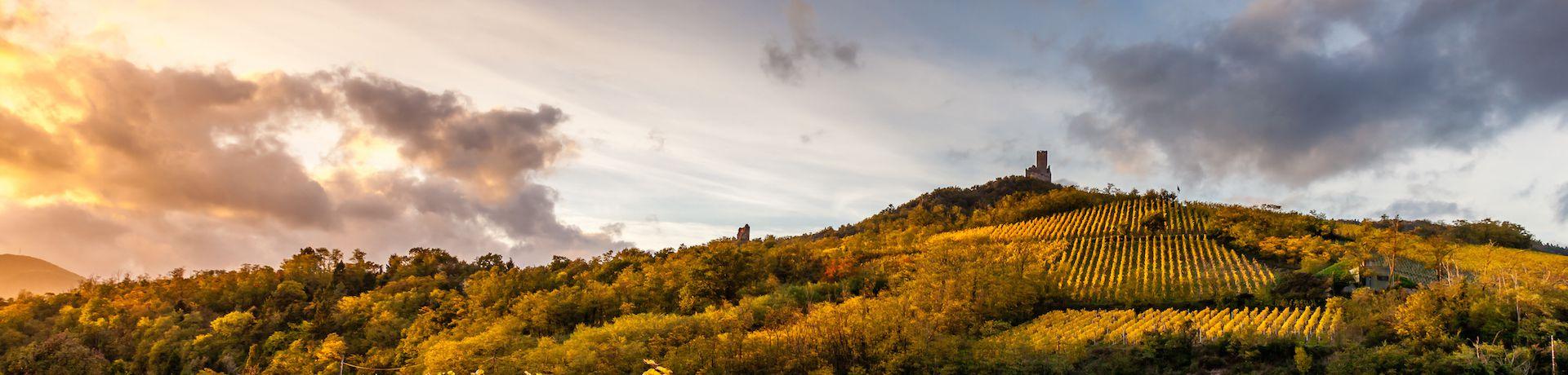 Supertrips - Luxe boomhut Zuid-Frankrijk