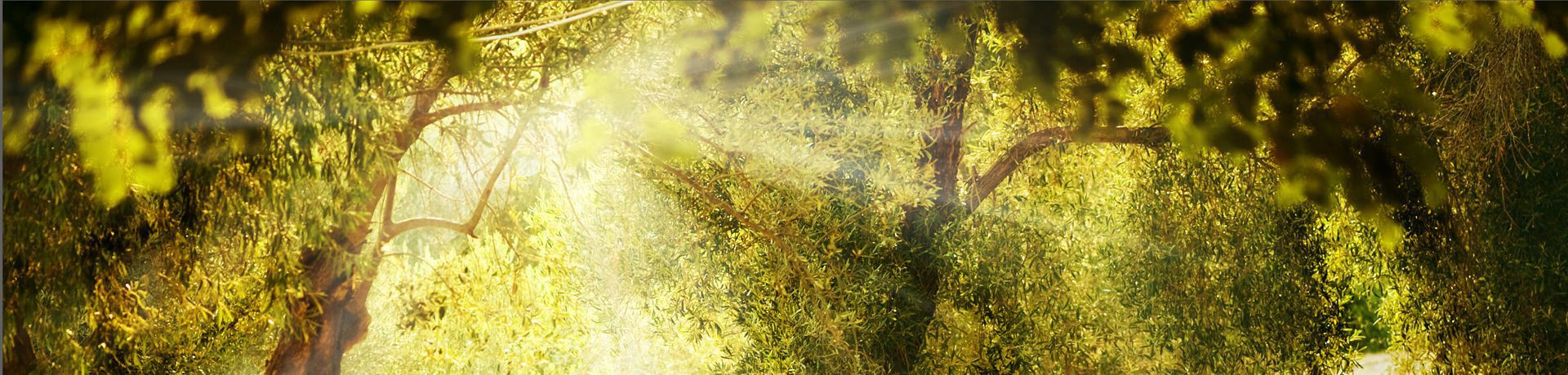 Supertrips - Novanta – TreeHugger Boomhut