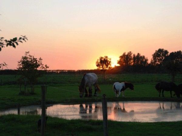 Boerenrustcamping De Kermisrose