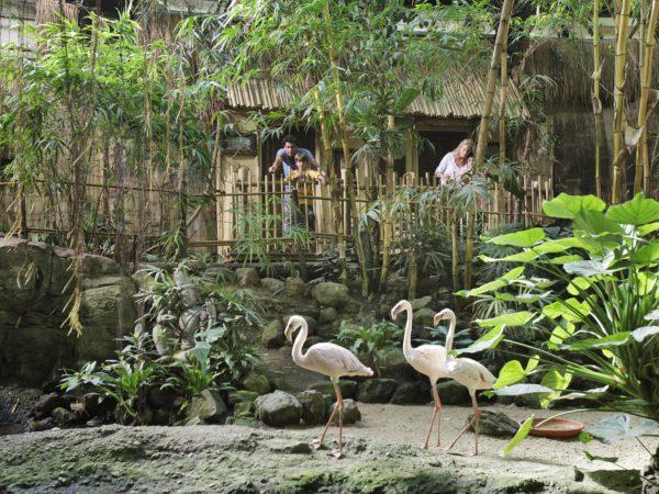Jungle Cabana - uitzicht
