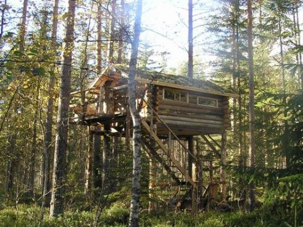 Zweedse boomhut