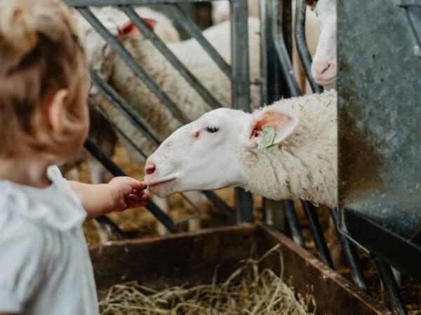 boerderij-met-dieren