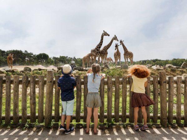 boomhutovernachting-vakantiepark-dierenbos-noord-brabant-1
