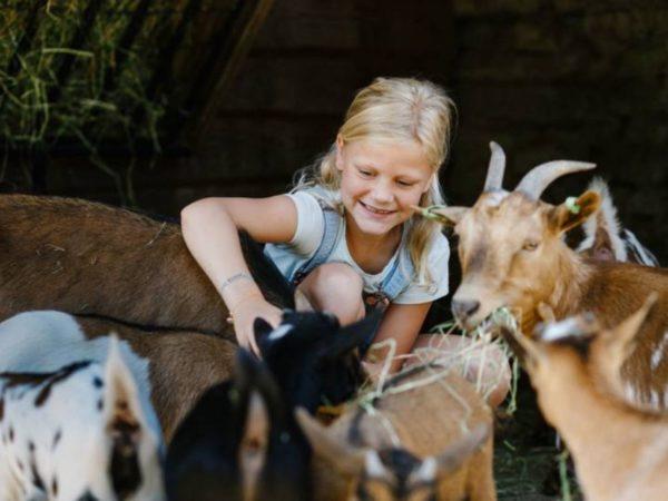 boomhutovernachting-vakantiepark-dierenbos-noord-brabant-8