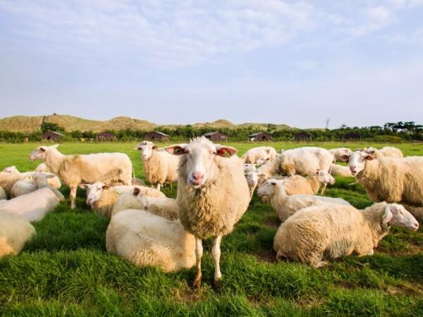 luxe-boerderij-overnachting