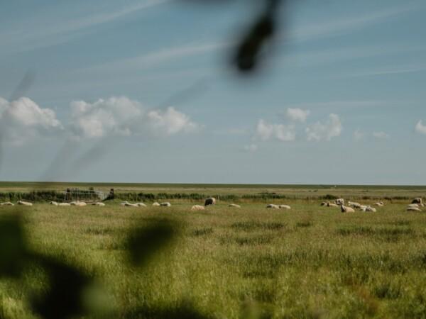 overnachten-op-boerderij-met-dieren
