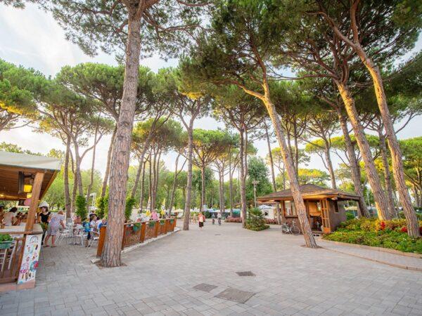 palmbomen-camping-aan-strand-strandcamping1