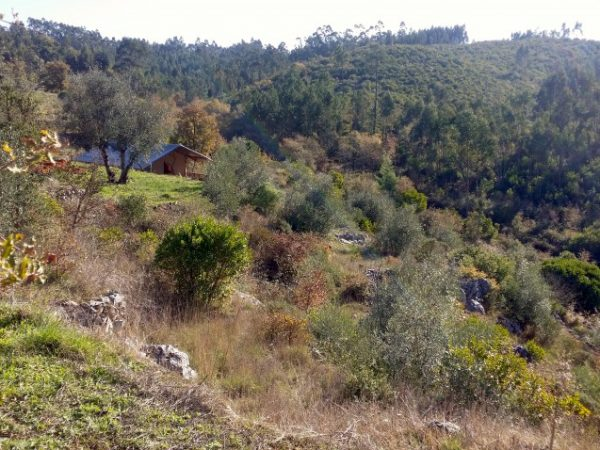 quinta vida verde portugal