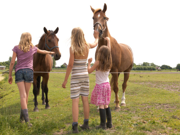 Met paardenpension