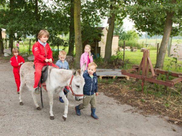 boderie boerderij ezel