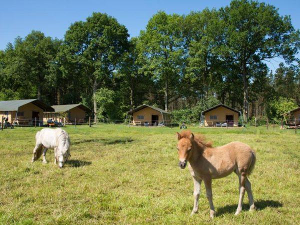 farmcamps bosrand