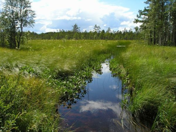 natuurlijke-overnachting-zweden