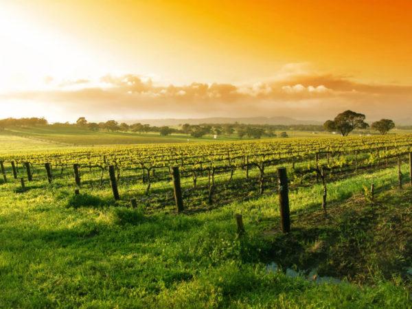wijnreis-frankrijk-4