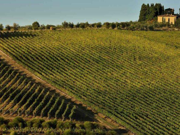 wijnreis-toscane