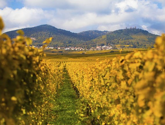 wijnroute-frankrijk