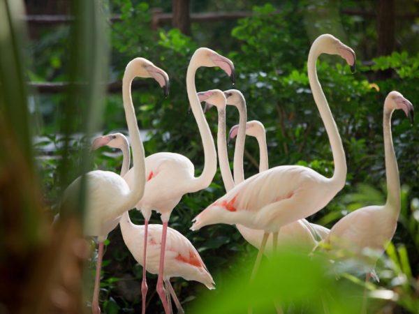 Tropical Islands Resort Duitsland