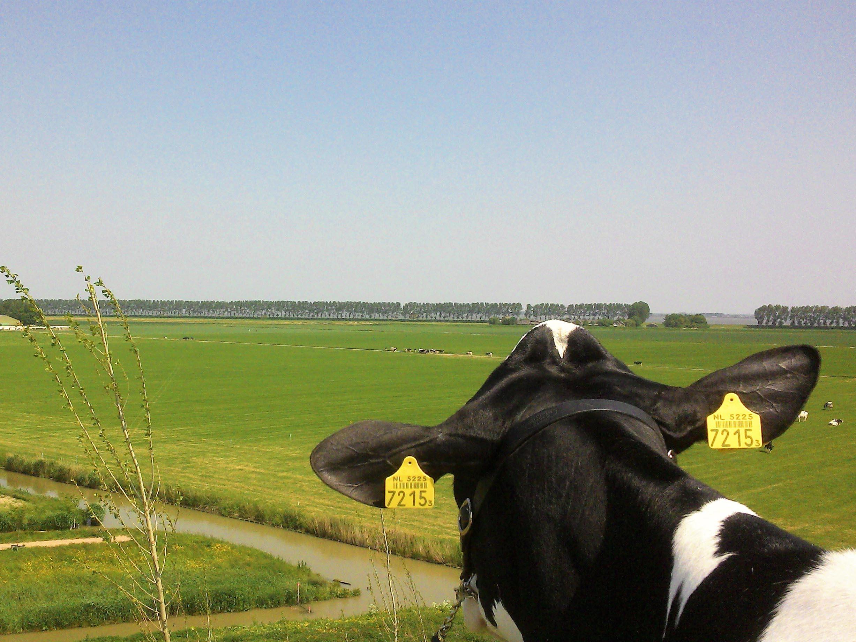 Supertrips - FarmCamps Op Flakkee – Sommelsdijk