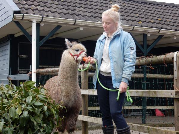 Overnachten-met-alpaca's-in-drenthe-zonneveld13