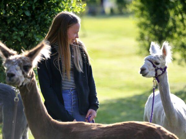zonneveld-alpaca's-bijzondere-overnachting-nederland-2
