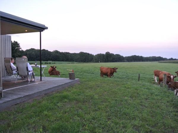 tiny-house-landschapkamer-natuurhuisje-in-Twente10