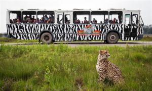 safaripark-beekse-bergen