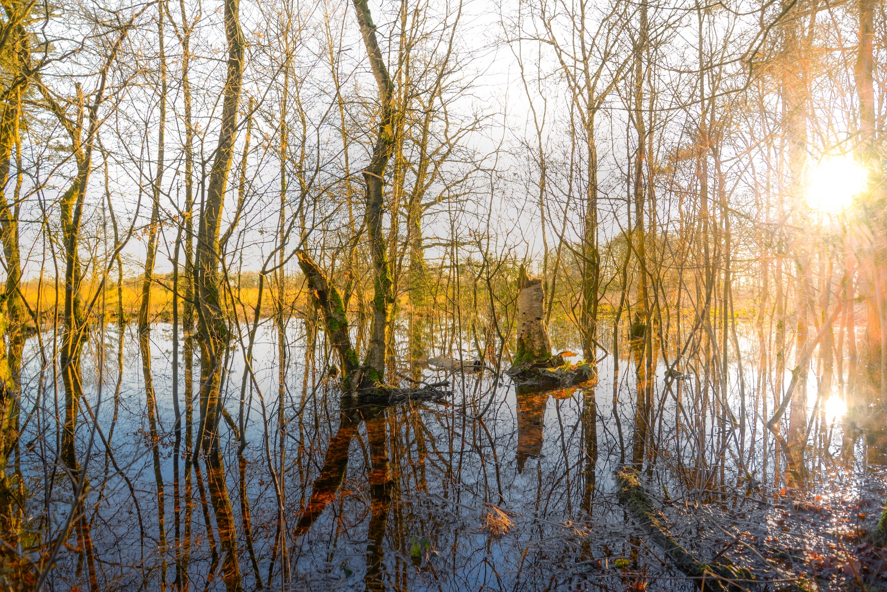 Supertrips - Glamping Drenthe
