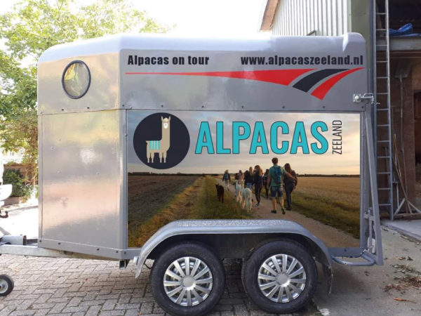 alpaca-on-wheels