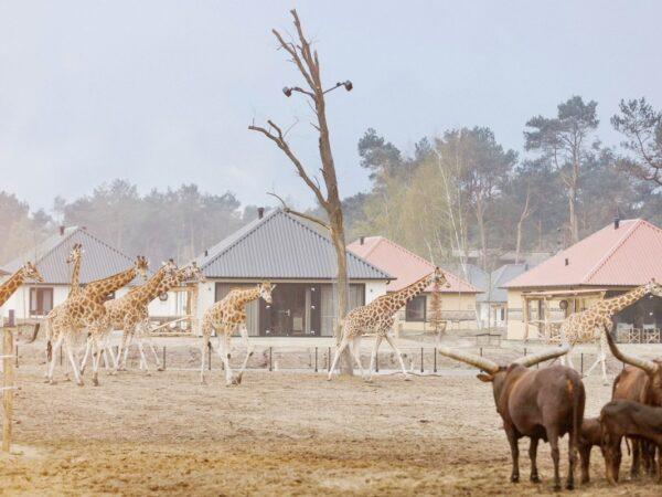 boomhut-tussen-de-wilde-dieren-6