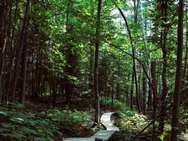 wandel-route-bomen