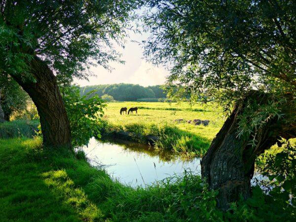wandelpaden-langs-weilanden
