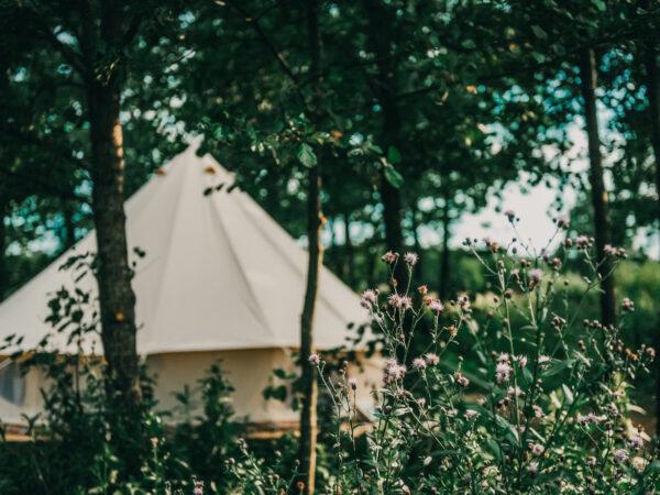 live-muziek-pop-up-camping